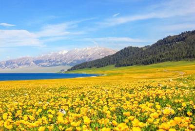 新疆春夏季节5-8月可以看哪些花?新疆旅游看花指南
