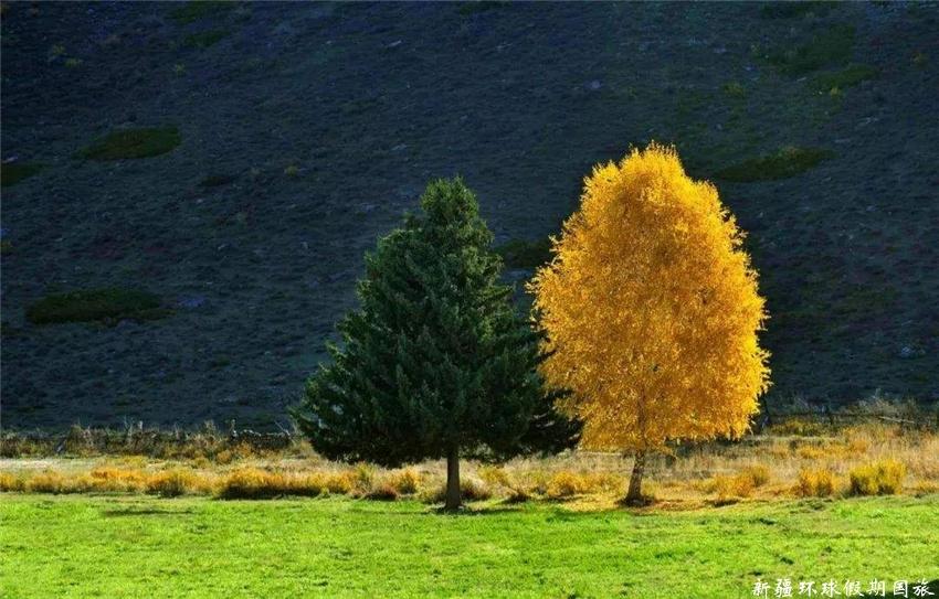 可可托海夫妻树
